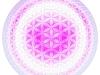 blume-des-lebens-sphere-2-brightperl2
