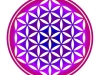 flower-of-life-punched-amethyst-indian-siam