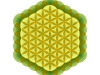 flower-of-metatron-element-earth-amazone1